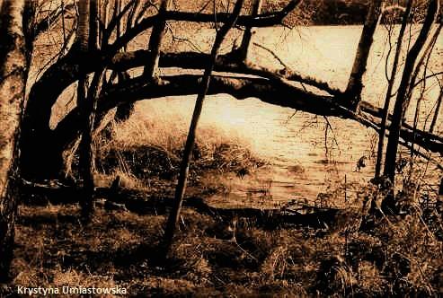 Forêt de Paimpol