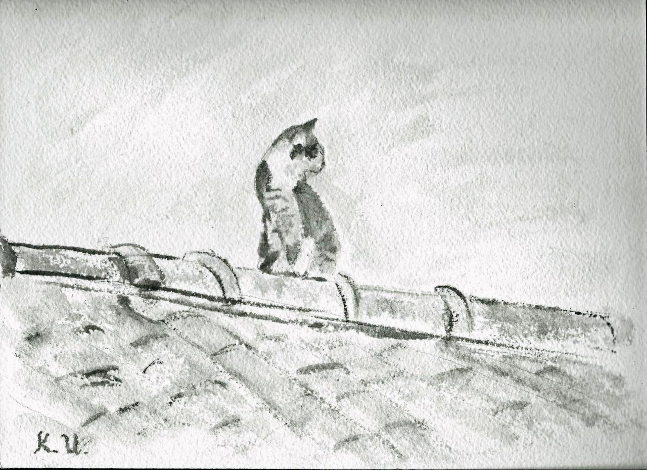 Matou sur le toit